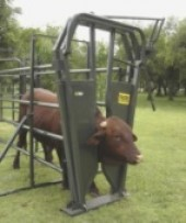Cattle Neck Clamp Theagritrader Com